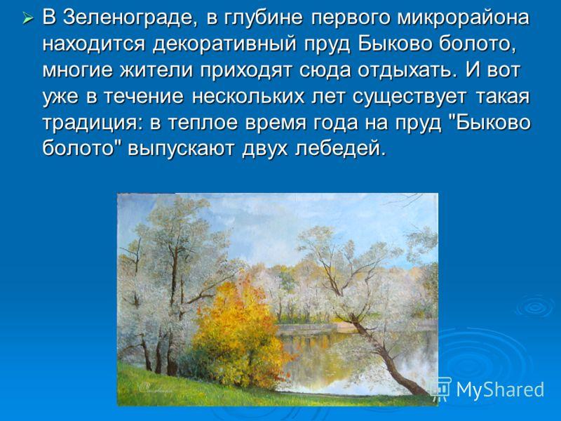 В Зеленограде, в глубине первого микрорайона находится декоративный пруд Быково болото, многие жители приходят сюда отдыхать. И вот уже в течение нескольких лет существует такая традиция: в теплое время года на пруд