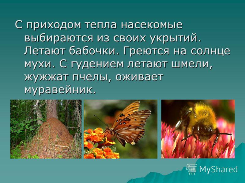 С приходом тепла насекомые выбираются из своих укрытий. Летают бабочки. Греются на солнце мухи. С гудением летают шмели, жужжат пчелы, оживает муравейник.