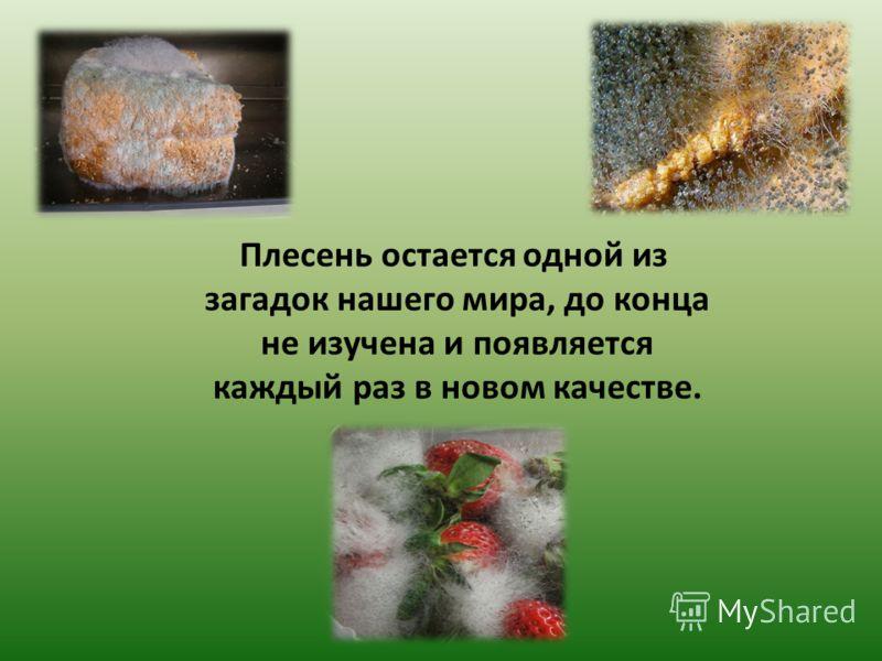 Плесень остается одной из загадок нашего мира, до конца не изучена и появляется каждый раз в новом качестве.
