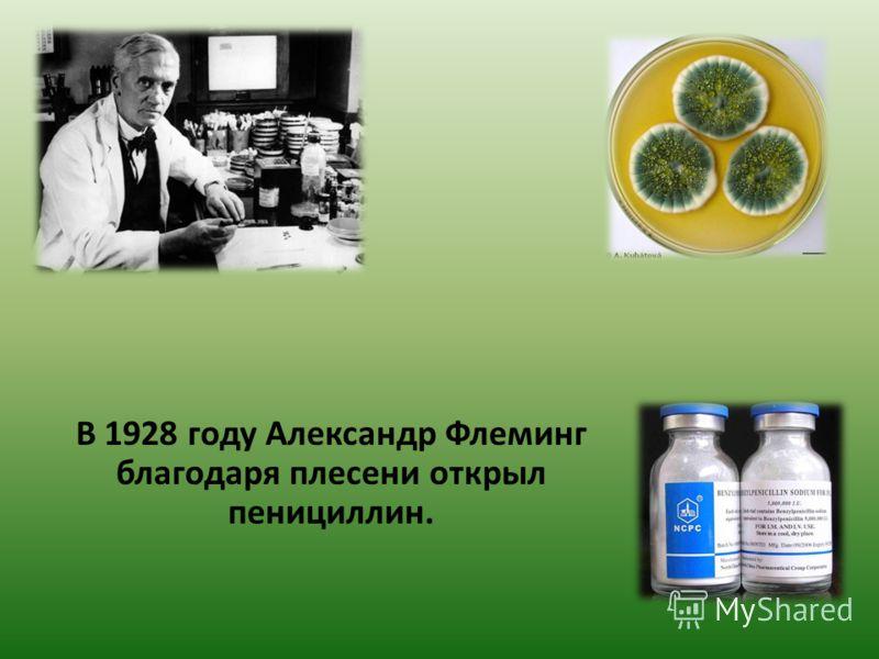 В 1928 году Александр Флеминг благодаря плесени открыл пенициллин.