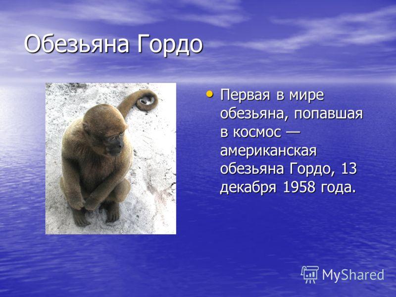 Обезьяна Гордо Первая в мире обезьяна, попавшая в космос американская обезьяна Гордо, 13 декабря 1958 года. Первая в мире обезьяна, попавшая в космос американская обезьяна Гордо, 13 декабря 1958 года.