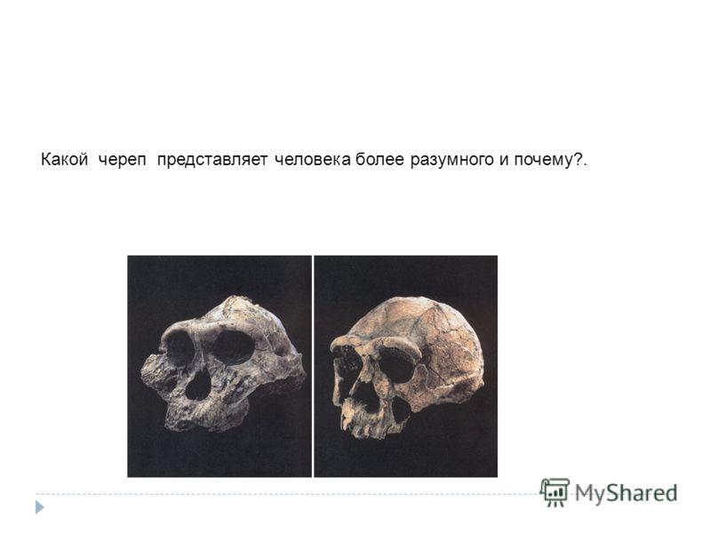 Какой череп представляет человека более разумного и почему?.