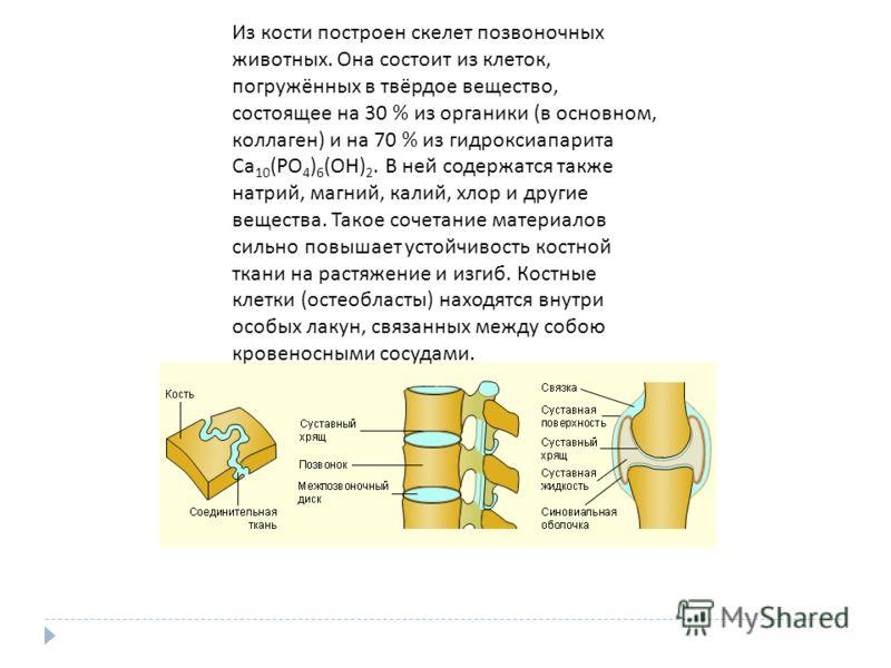 Из кости построен скелет позвоночных животных. Она состоит из клеток, погружённых в твёрдое вещество, состоящее на 30 % из органики ( в основном, коллаген ) и на 70 % из гидроксиапарита Ca 10 (PO 4 ) 6 (OH) 2. В ней содержатся также натрий, магний, к