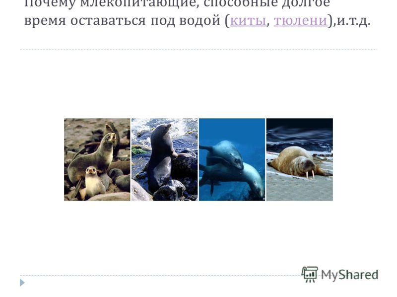 Почему млекопитающие, способные долгое время оставаться под водой ( киты, тюлени ), и. т. д. киты тюлени