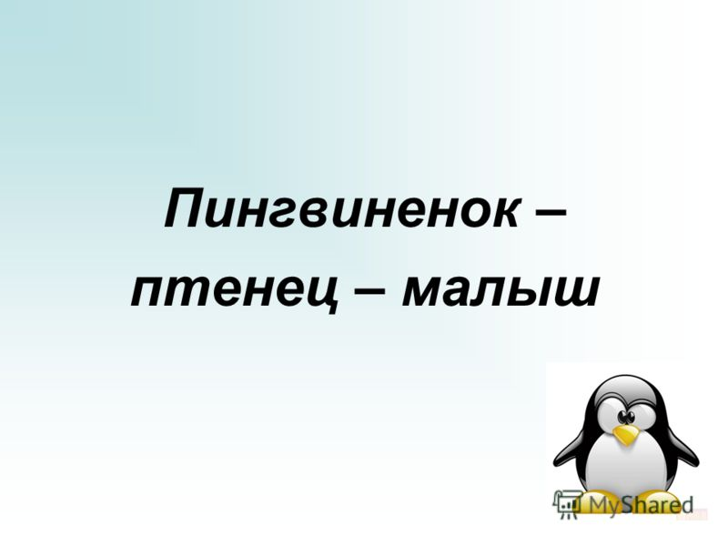 Пингвиненок – птенец – малыш