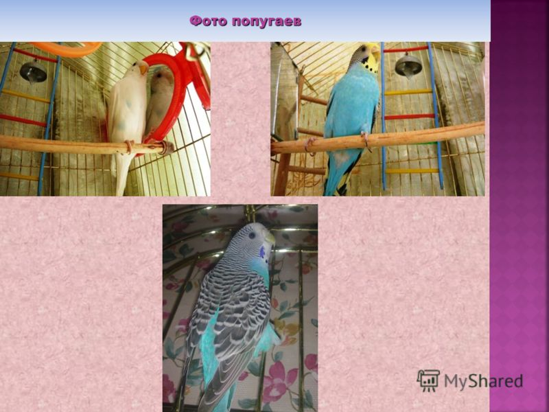 Фото попугаев