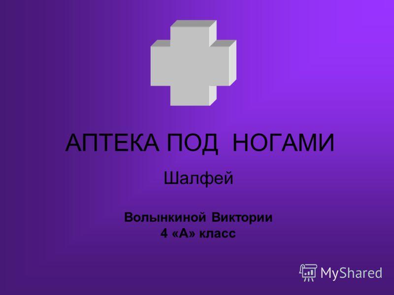 АПТЕКА ПОД НОГАМИ Шалфей Волынкиной Виктории 4 «А» класс