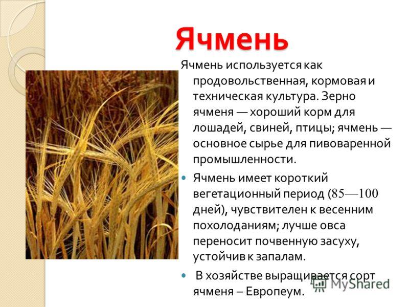 Ячмень Ячмень используется как продовольственная, кормовая и техническая культура. Зерно ячменя хороший корм для лошадей, свиней, птицы ; ячмень основное сырье для пивоваренной промышленности. Ячмень имеет короткий вегетационный период ( 85100 дней )