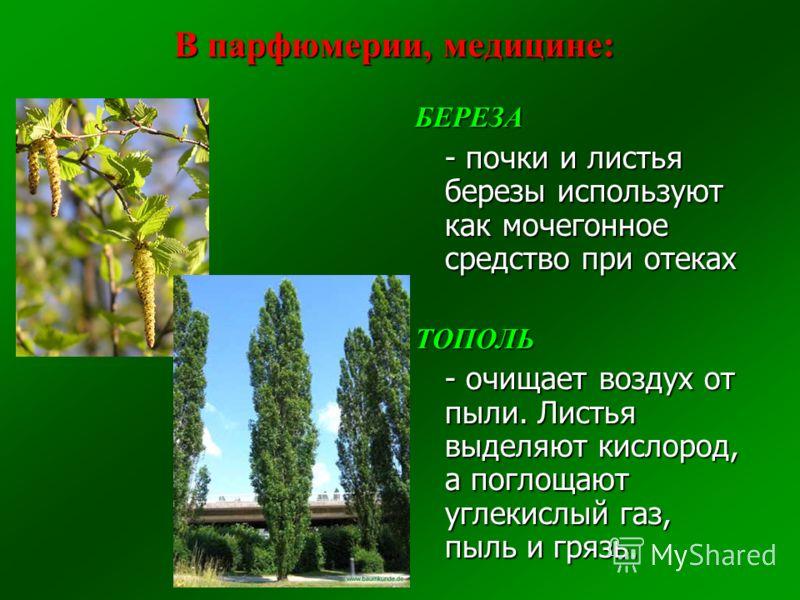 БЕРЕЗА - почки и листья березы используют как мочегонное средство при отеках ТОПОЛЬ - очищает воздух от пыли. Листья выделяют кислород, а поглощают углекислый газ, пыль и грязь.