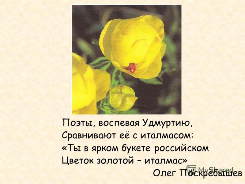 Поэты, воспевая Удмуртию, Сравнивают её с италмасом: «Ты в ярком букете российском Цветок золотой – италмас» Олег Поскрёбышев