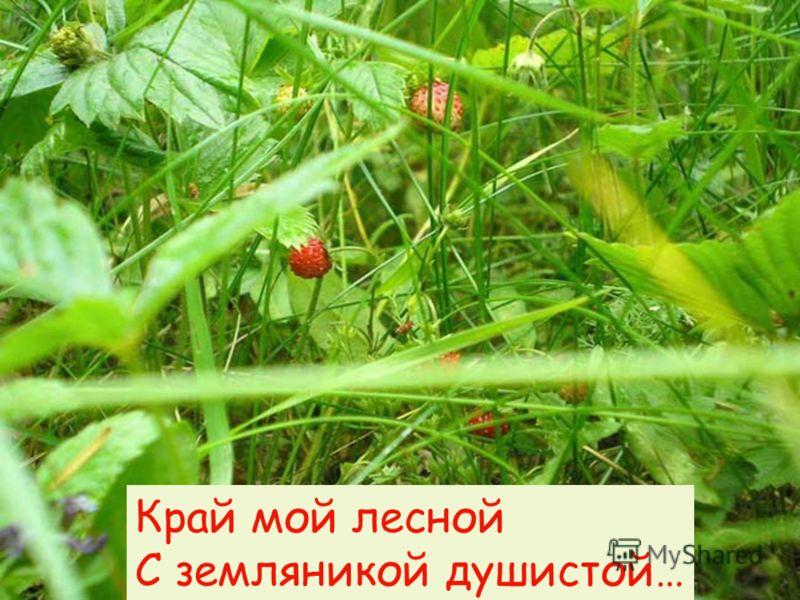 Край мой лесной С земляникой душистой…