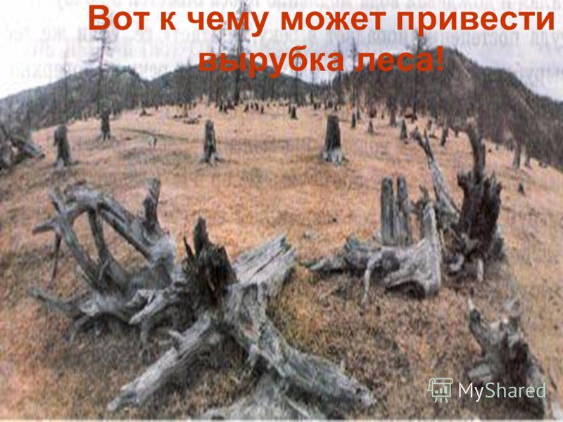 Вот к чему может привести вырубка леса!