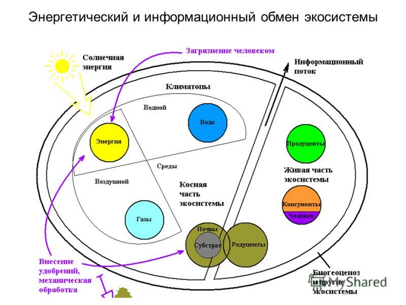 Энергетический и информационный обмен экосистемы