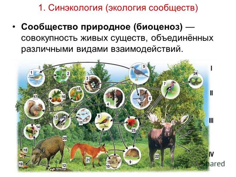 1. Синэкология (экология сообществ) Сообщество природное (биоценоз) совокупность живых существ, объединённых различными видами взаимодействий.