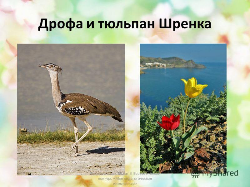 Дрофа и тюльпан Шренка http://www.deti-66.ru/ II Всероссийский конкурс «Моя педагогическая инициатива»