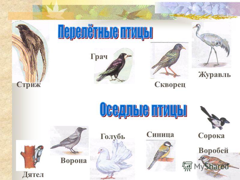 Перелётные птицы. Птицы-непоседы. Посмотри.как они прыгают с ветки на ветку.перелетают с дерева на дерево! Но так ведь и белка умеет или какой-нибудь другой зверёк.А вот улететь за тысячи километров и после снова возвратиться могут только птицы.. И д