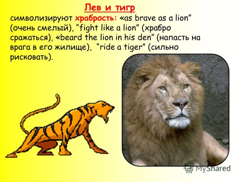 Лев и тигр символизируют храбрость: «as brave as a lion (очень смелый), fight like a lion (храбро сражаться), «beard the lion in his den (напасть на врага в его жилище), ride a tiger (сильно рисковать).