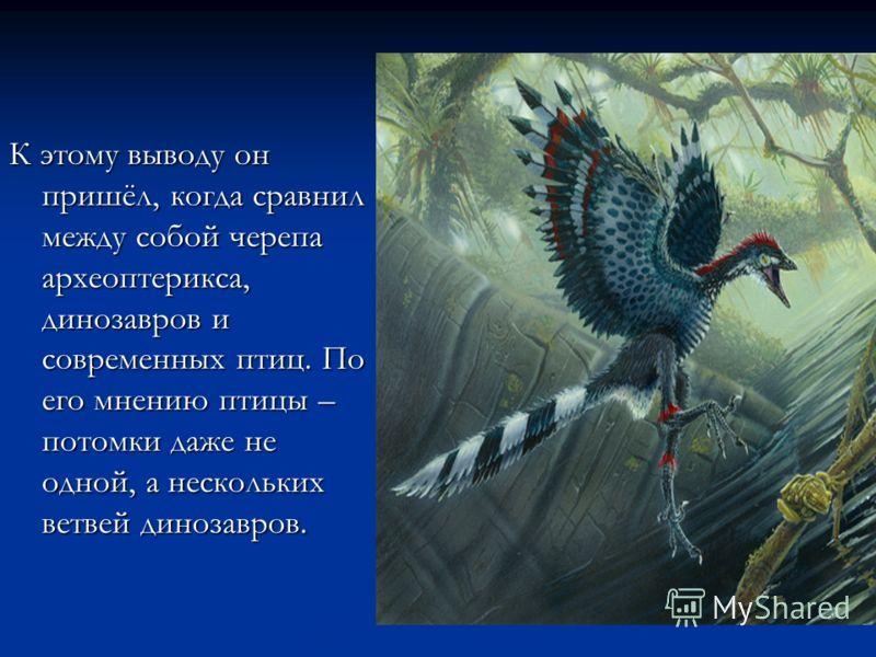 К этому выводу он пришёл, когда сравнил между собой черепа археоптерикса, динозавров и современных птиц. По его мнению птицы – потомки даже не одной, а нескольких ветвей динозавров.