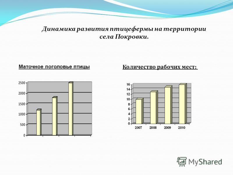 Динамика развития птицефермы на территории села Покровки. Маточное поголовье птицы Количество рабочих мест: