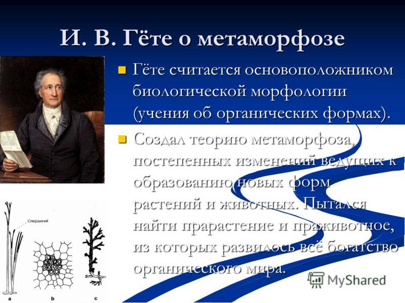 И. В. Гёте о метаморфозе Гёте считается основоположником биологической морфологии (учения об органических формах). Гёте считается основоположником биологической морфологии (учения об органических формах). Создал теорию метаморфоза, постепенных измене