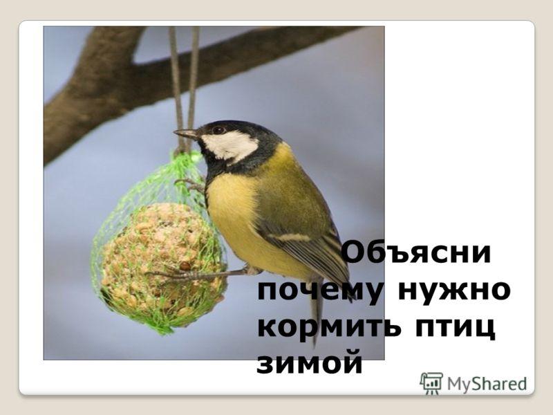 Объясни почему нужно кормить птиц зимой