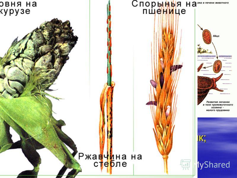 Паразитизм. Макропаразиты растут в теле хозяина, но, размножаясь, образуют особые формы, которые покидают одного хозяина, чтобы заселить другого. Макропаразиты растут в теле хозяина, но, размножаясь, образуют особые формы, которые покидают одного хоз