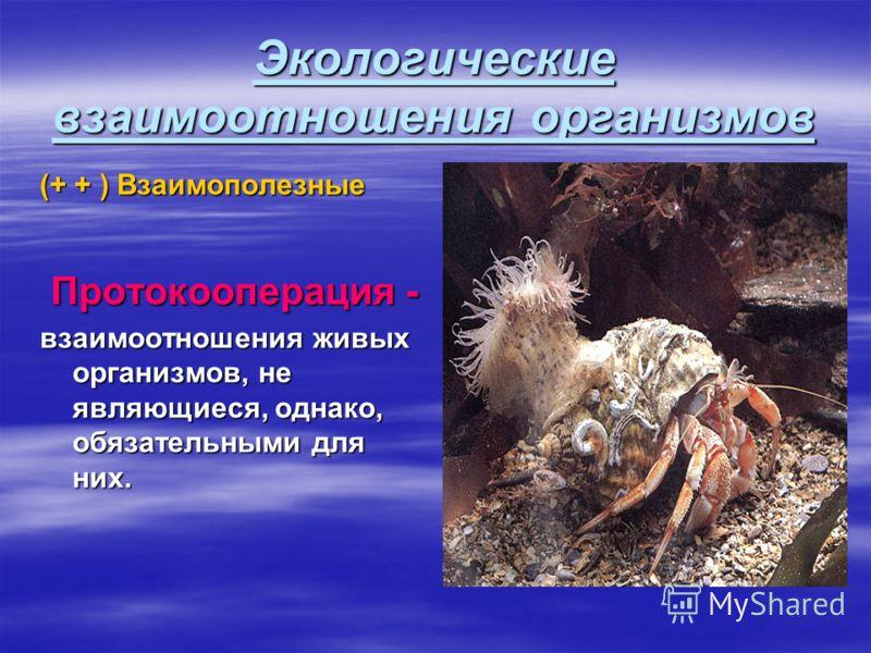 Экологические взаимоотношения организмов (+ + ) Взаимополезные Протокооперация - Протокооперация - взаимоотношения живых организмов, не являющиеся, однако, обязательными для них.