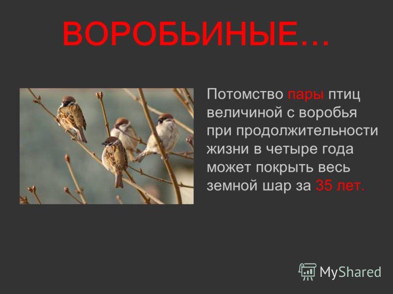ВОРОБЬИНЫЕ… Потомство пары птиц величиной с воробья при продолжительности жизни в четыре года может покрыть весь земной шар за 35 лет.