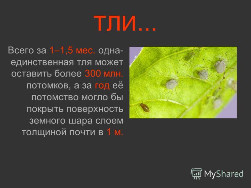 ТЛИ… Всего за 1–1,5 мес. одна- единственная тля может оставить более 300 млн. потомков, а за год её потомство могло бы покрыть поверхность земного шара слоем толщиной почти в 1 м.