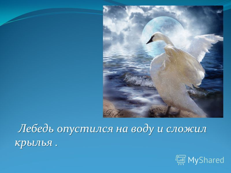 Лебедь опустился на воду и сложил крылья.