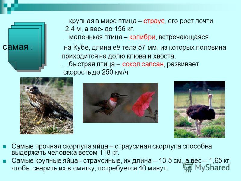 . крупная в мире птица – страус, его рост почти 2,4 м, а вес- до 156 кг.. маленькая птица – колибри, встречающаяся самая : на Кубе, длина её тела 57 мм, из которых половина приходится на долю клюва и хвоста.. быстрая птица – сокол сапсан, развивает с