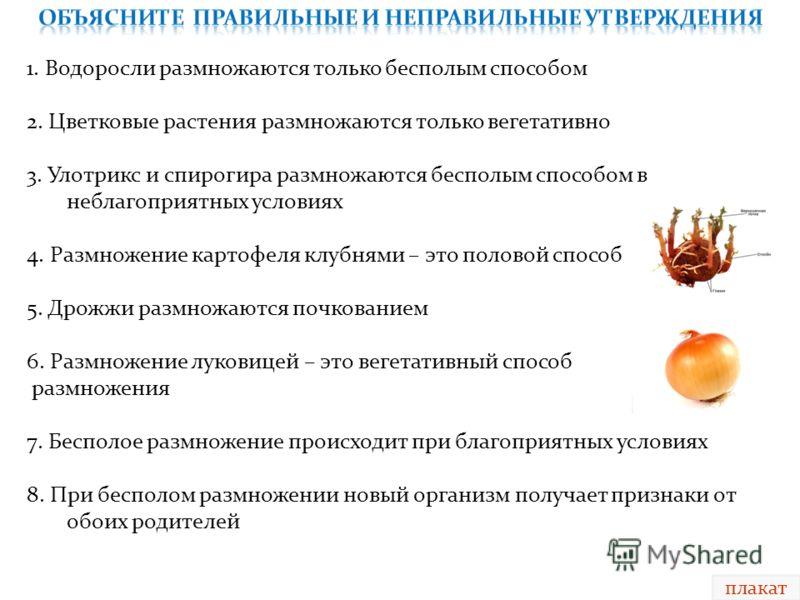 плакат 1. Водоросли размножаются только бесполым способом 2. Цветковые растения размножаются только вегетативно 3. Улотрикс и спирогира размножаются бесполым способом в неблагоприятных условиях 4. Размножение картофеля клубнями – это половой способ 5