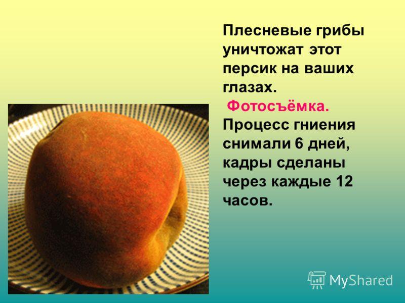 Плесневые грибы уничтожат этот персик на ваших глазах. Фотосъёмка. Процесс гниения снимали 6 дней, кадры сделаны через каждые 12 часов.