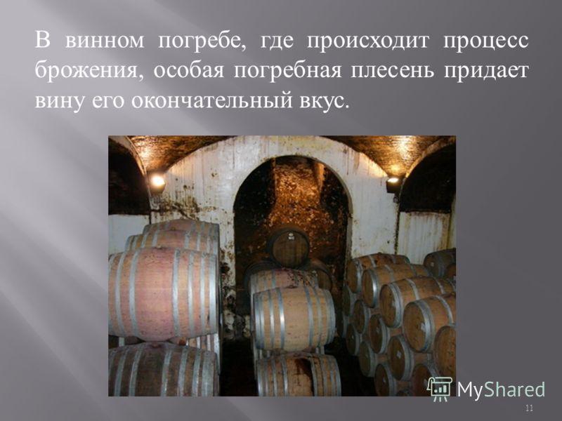 В винном погребе, где происходит процесс брожения, особая погребная плесень придает вину его окончательный вкус. 11