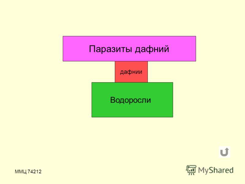 ММЦ 74212 Паразиты дафний дафнии Водоросли