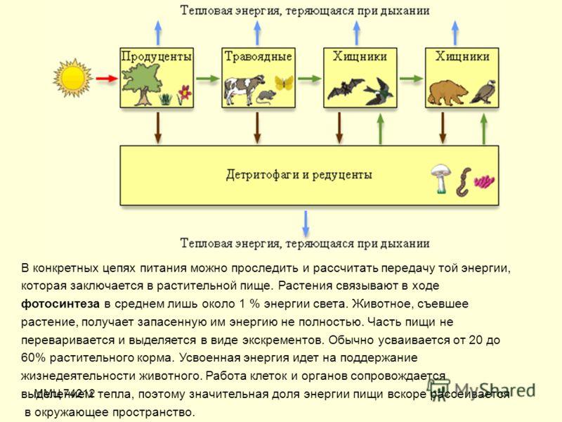 ММЦ 74212 В конкретных цепях питания можно проследить и рассчитать передачу той энергии, которая заключается в растительной пище. Растения связывают в ходе фотосинтеза в среднем лишь около 1 % энергии света. Животное, съевшее растение, получает запас
