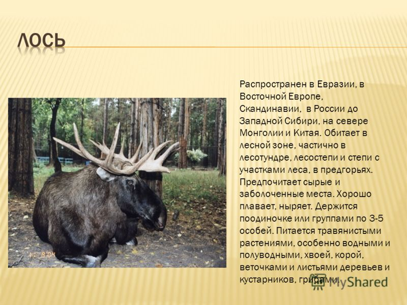 Распространен в Евразии, в Восточной Европе, Скандинавии, в России до Западной Сибири, на севере Монголии и Китая. Обитает в лесной зоне, частично в лесотундре, лесостепи и степи с участками леса, в предгорьях. Предпочитает сырые и заболоченные места