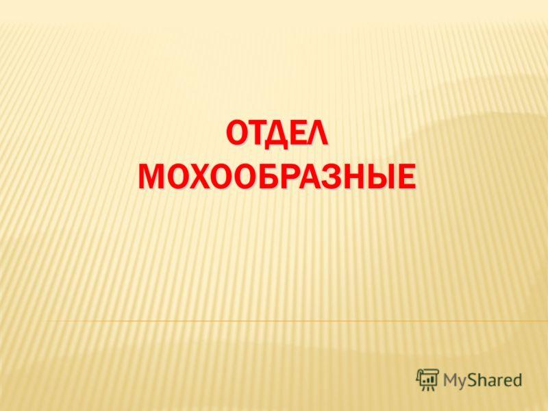 ОТДЕЛ МОХООБРАЗНЫЕ
