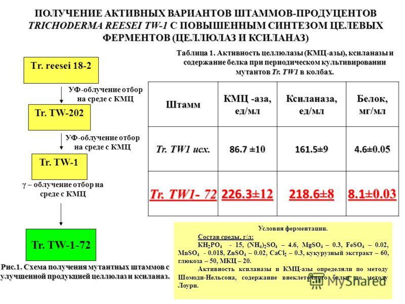 Штамм КМЦ -аза, ед/мл Ксиланаза, ед/мл Белок, мг/мл Tr. TW1 исх. 86.7 ±10 161.5 ±9 4.6 ±0.05 Tr. TW1- 72 226.3 ±12 218.6 ±8 8.1 ±0.03 Таблица 1. Активность целлюлазы (КМЦ-азы), ксиланазы и содержание белка при периодическом культивировании мутантов T