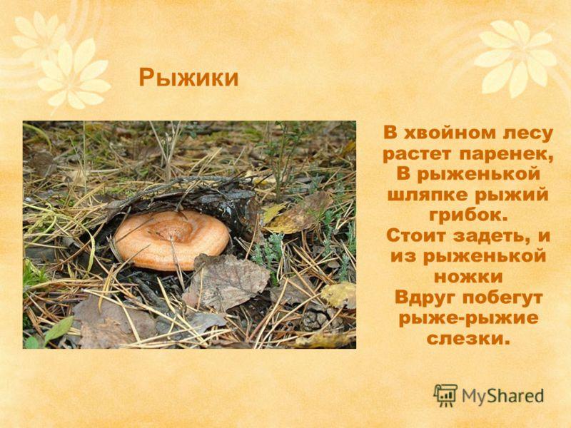 Рыжики В хвойном лесу растет паренек, В рыженькой шляпке рыжий грибок. Стоит задеть, и из рыженькой ножки Вдруг побегут рыже-рыжие слезки.