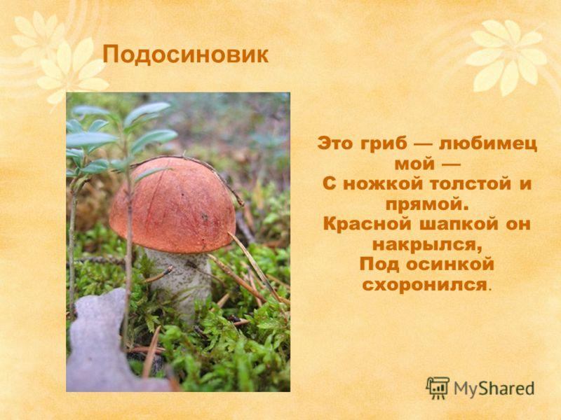 Подосиновик Это гриб любимец мой С ножкой толстой и прямой. Красной шапкой он накрылся, Под осинкой схоронился.