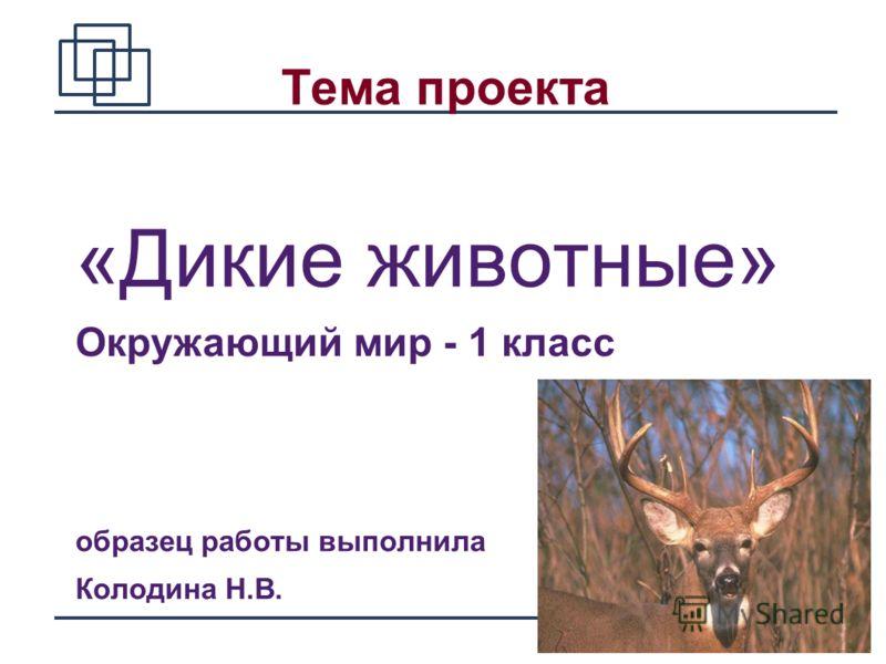 1 Тема проекта «Дикие животные» Окружающий мир - 1 класс образец работы выполнила Колодина Н.В.