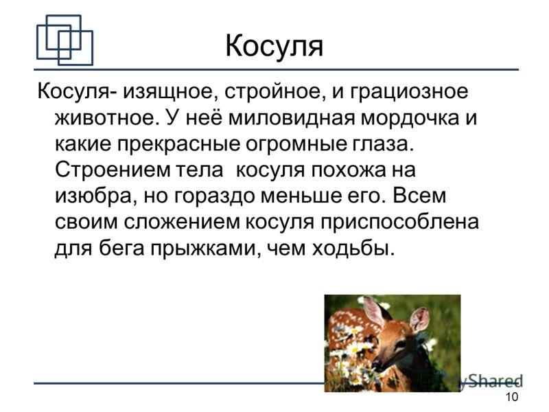 10 Косуля Косуля- изящное, стройное, и грациозное животное. У неё миловидная мордочка и какие прекрасные огромные глаза. Строением тела косуля похожа на изюбра, но гораздо меньше его. Всем своим сложением косуля приспособлена для бега прыжками, чем х