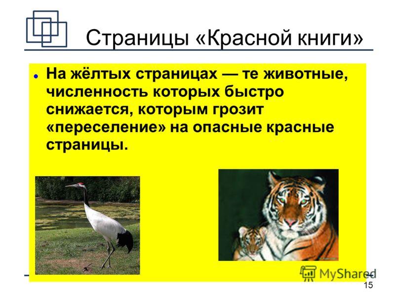 15 Страницы «Красной книги» На жёлтых страницах те животные, численность которых быстро снижается, которым грозит «переселение» на опасные красные страницы.