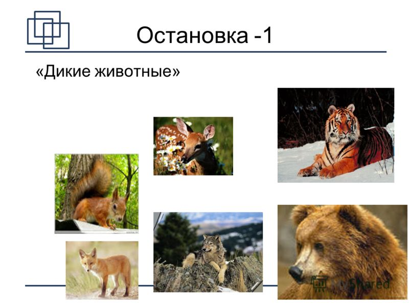 4 «Дикие животные» Остановка -1