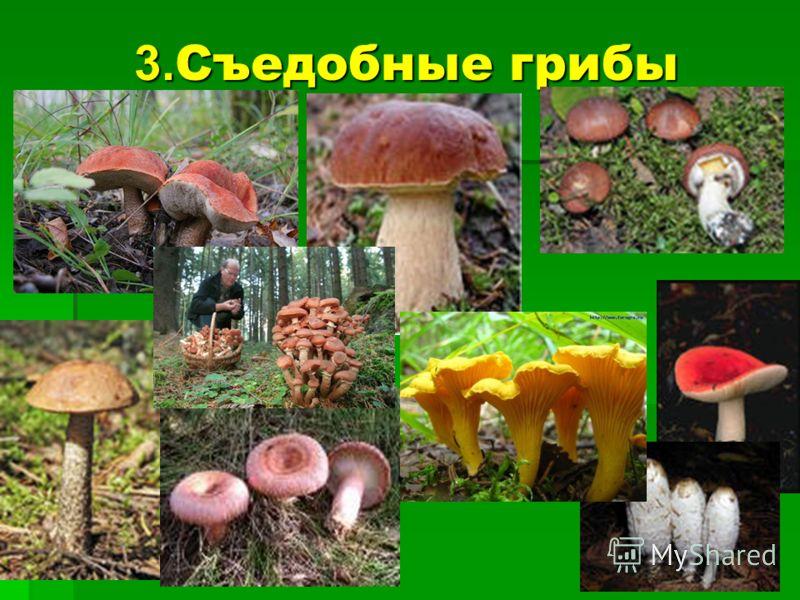 3. Съедобные грибы