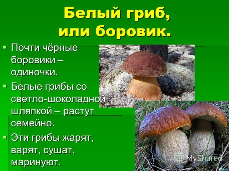 Белый гриб, или боровик. Белый гриб, или боровик. Почти чёрные боровики – одиночки. Почти чёрные боровики – одиночки. Белые грибы со светло-шоколадной шляпкой – растут семейно. Белые грибы со светло-шоколадной шляпкой – растут семейно. Эти грибы жаря