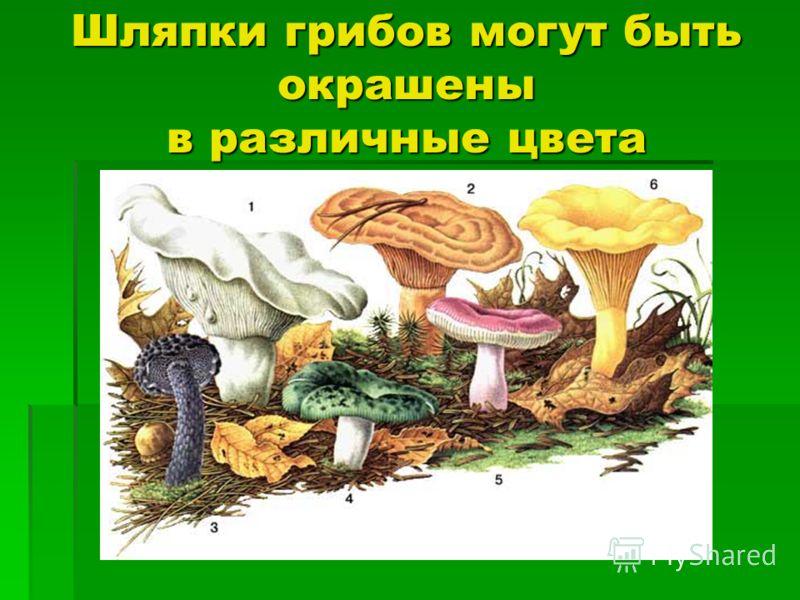 Шляпки грибов могут быть окрашены в различные цвета