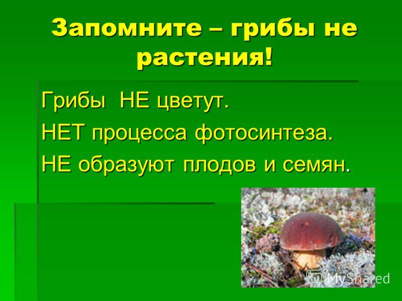 Запомните – грибы не растения! Грибы НЕ цветут. НЕТ процесса фотосинтеза. НЕ образуют плодов и семян.