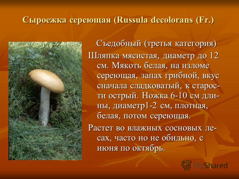 Сыроежка сереющая (Russula decolorans (Fr.) Сыроежка сереющая (Russula decolorans (Fr.) Съедобный (третья категория) Шляпка мясистая, диаметр до 12 см. Мякоть белая, на изломе сереющая, запах грибной, вкус сначала сладковатый, к старос- ти острый. Но